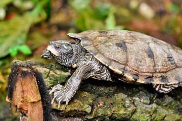 soñar con tortuga