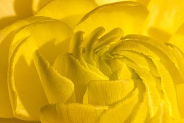 soñar con color amarillo