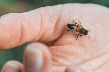 Soñar que te pica una abeja