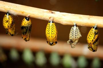Soñar con larvas