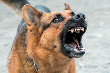 Soñar con perro bravo