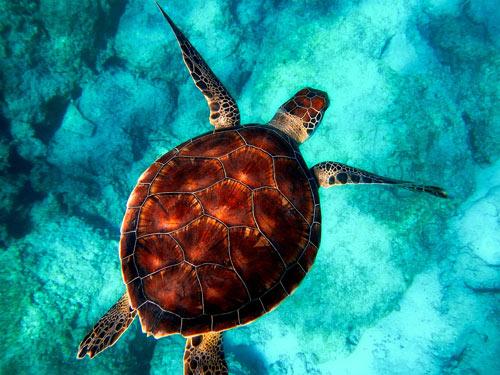 tortuga en acuario