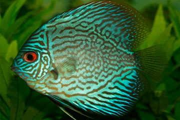 Significado de soñar con peces o pescados grandes